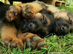 Holy moly, puppy hugs are so cute! #germanshepherd
