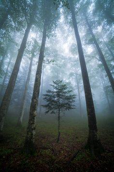 Forêts by Vincent Favre