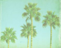 VIntage Palm Tree Beach Print - Blue Green Retro Tropical Ocean Beach House Photograph. $25.00, via Etsy.    what about this in a large size for the DR wall?