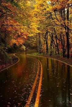 Autumn can not get here fast enough! My favorite season. I totally agree!!