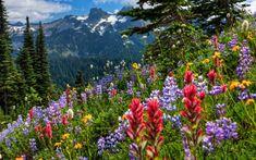 En-Güzel-Bahar-Doğa-Manzaraları.jpg (1280×800)