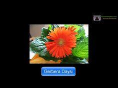 https://youtu.be/XJzSgeN8TSw ♲Macetas Para Plantas De Interior - ♻Hacer Macetas Recicladas Y Aprende A Decorar Tu Jardin E Interiores