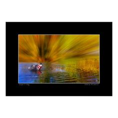Siberian Husky  in a river rippling with the colors of fall. Thew manipulation of the image gives the appearance of a firestorm.Manipulated color image.  Open edition fine art prints can be purchased here:   http://fineartamerica.com/featured/siberian-firestorm-wayne-king.html  http://www.redbubble.com/people/waynedking/works/12838427-siberian-firestorm