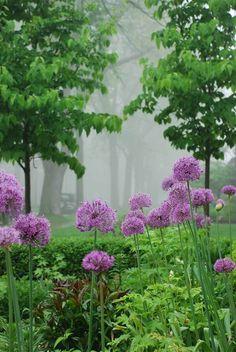 Gardening With Allium Beautiful Flowers Garden, Beautiful Gardens, Garden Pictures, Dream Garden, The Fresh, Garden Inspiration, Garden Plants, Garden Landscaping, Mother Nature