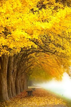 Yellow Tree by Topic Images Beautiful World, Beautiful Places, Beautiful Pictures, Beautiful Nature Wallpaper, Beautiful Landscapes, Yellow Tree, Yellow Leaves, Autumn Scenes, Colorful Trees