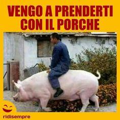 Mezzi di trasporto alternativi Porsche Carrera, Porsche Panamera, Porsche Classic, Funny Animal Pictures, Funny Images, Funny Posts, Funny Cute, Foto Face, Italian Memes