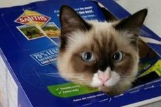 15 Cats Who Love Living in A Box – A Cardboard Box