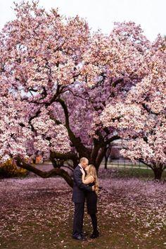 Cherry blossom trees make such a gorgeous engagement photo backdrop | Jason Thomas Crocker Photography