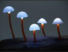 Funghi luminosi