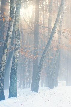 misty winter  | by Sandra Bartocha