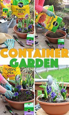 Container Garden: Pl