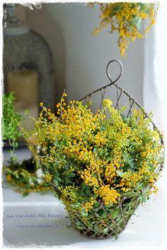 La vie avec des fleurs~「花のある暮らし」~VERDURE流で|ファヴォリートス~フレンチシックに心地よさを感じて ミモザ、mimosa