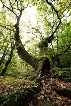 Árbol en el parque natural Saja - Besaya  #Cantabria #Spain