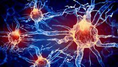 Pour la Science, Comment notre cerveau produit-il de l'électricité ?