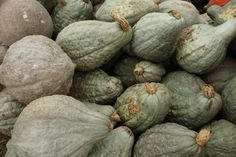 When and how to harvest Hubbard Squash - when the vine starts to die back.