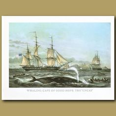 Whaling, Cape of Good Hope, the UncasAn American whaling ship at the Cape of Good Hope with Cape Town in the background.This lithograph was made in the 1950s by litho-offset on very high quality, thick paper. The paper is creamy white and in excellent condition.Please note, the images on this web si