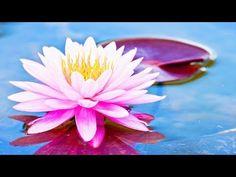 Relaxing Music, Meditation Music, Sleep Music, Reiki Healing Music, Yoga, Spa, Zen Music, ☯1952 Meditation Music, Breathing Meditation, Reiki Meditation, Meditation Practices, Guided Meditation, Chakra Healing Music, Reiki Music, New Age Music, Work Music