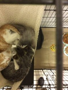 Kittens, Cats, Shelters, Type 3, North Carolina, Facebook, Photos, Animals, Cute Kittens
