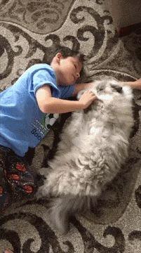 Much Fluff