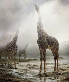 TOXIC SYNESTHESIA Best Place of Artistic World - Simen Johan: Digital Photography ofu00a0 Wild Animals...