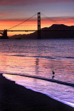 wonderous-world:  Crissy Fields sunset by canbalci on Flickr.