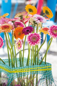 Close-up of a gerbera bouquet close to the beach #pinkegerberas #whitegerberas #inspiration #colouredbygerbera #dutchgerbera
