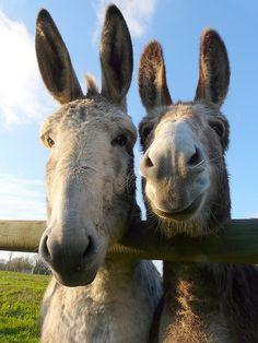 Tweedle Dee & Tweedle DUMB!!