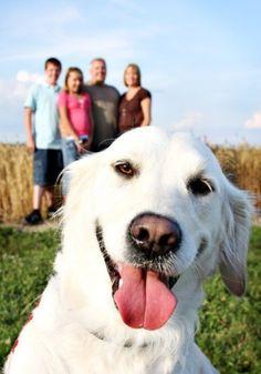 Yo y mi familia me gusta jugar con mis perros. Tengo dos perros que son de color blanco. Les corremos mucho.