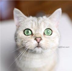 Cette adorable chatte sait comment faire ressortir ses yeux. | 16 photos de chats qui sont plus doués que vous pour faire un trait d'eye-liner