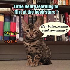 Bengal cat, Kitten, Whiskers : Little Henrylearning to fTirtat the book store Hey babes..wanna read something? Wink