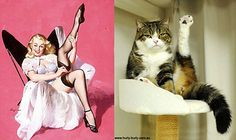 Cats+Pose+Like+Pin+Ups