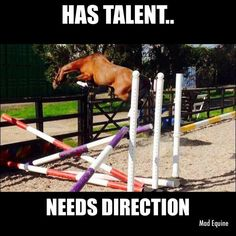 Ha! This is so my two year old. He has wonderful talent... but staying inside a dressage ring... Let's say we're still working on it!
