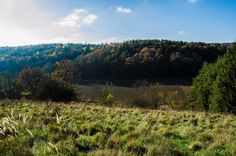 Herbstwald | Flickr - Fotosharing! Photography Photos, Vineyard, Mountains, Explore, Nature, Travel, Outdoor, Photos, Woods