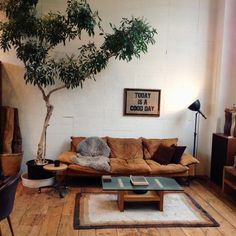 wohnzimmer einrichten zimmerbaum und schöne zimmerpflanzen