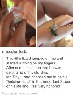 67 Super Ideas For Funny Baby Animals Hilarious So Cute Cute Funny Animals, Cute Baby Animals, Funny Cute, Hilarious, Super Funny, Funny Lizards, Creepy, Little Lizard, Doja Cat