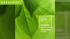 Love Pantone's 2017 Color of the Year, greenery.