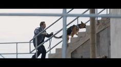 A Dog's Purpose - Movie
