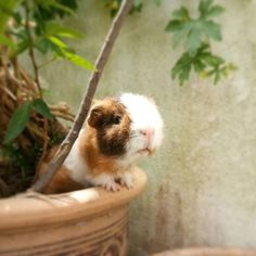 85 Followers, 0 Following, 182 Posts - See Instagram photos and videos from guinea pigs profile (@themonmondisease)