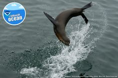 We're flipping excited that World Ocean Day is almost here! Be sure to check back on June 8 for our photo contest winners and an awesome video to celebrate! #30DaysofOcean
