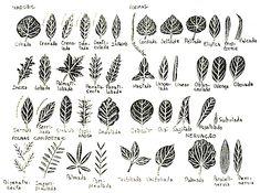 tipos de folhas - Pesquisa Google