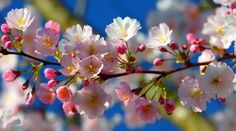 Spring Awakening, Beautiful Roses, Spring Flowers, Spring Time, Scenery, Presentation, Seasons, Nature, Photography