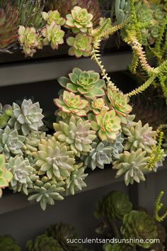 Succulent Cafe in Oceanside; if you like succelents, this whole blog post is not to be missed