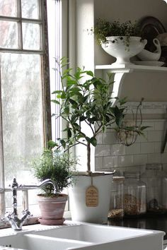 A bright, sunny window for growing a Lime tree, clean looking subway tiles on the backsplash and great open shelves. Also, love the Victorian style faucet!!