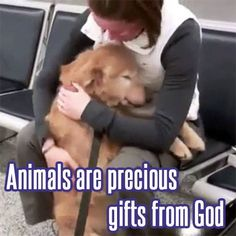 Animals are precious gifts from God