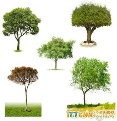 Five trees PSD
