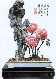 Paeonia Moutan by Yee-Sun Wu. Ying Tak Black Stone.