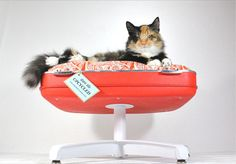 For the kitties, upcycled vintage suitcase cat bed