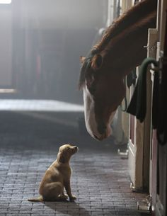 ❦ The Clydesdales have been a beloved part of America's Super Bowl tradition for years. For the 2014 game, which airs on Feb. 2 on Fox, Anheuser Busch, makers of Budweiser, have confirmed that the popular Clydesdales will star in a new commercial, and they will be accompanied by one adorable puppy.