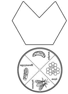 ideenreise faltheft tiere lebenszyklen sachunterricht grundschule und honigbiene. Black Bedroom Furniture Sets. Home Design Ideas