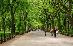 50 Cool Things To Do In New York City - Central Park, maybe? Or a couple of pictures, maybe from above, or whatever we can do!